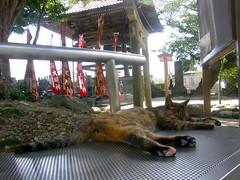 catnap (hamapenguin) Tags: animal cat temple 猫 straycat ネコ 野良猫
