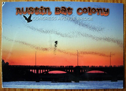 Austin's Congress Ave Bridge Bats