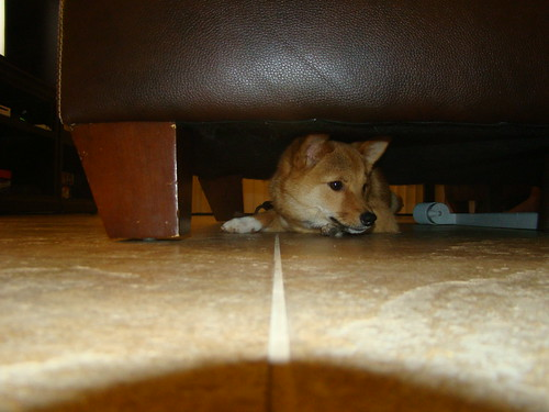 taro (@_tar0) under the couch 2