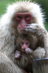 The same pose (Masashi Mochida) Tags: baby snow japan monkey mother nagano jigokudani naturesfinest coth supershot specanimal abigfave rubyphotographer alittlebeauty
