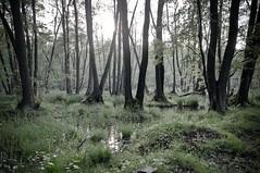 Land of the mosquito (GregoireC - www.gregoirec.com) Tags: abandoned forest pentax military swamp soviet ddr marsh barracks dri urbex vogelsang k7 sigma1020mmf456exdc gssd