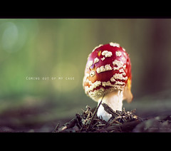 #5 [Explored/Frontpage] (Sabrina Walther) Tags: camera wood autumn light shadow brown sunlight white plant color detail macro green nature mushroom photoshop canon germany season lens landscape mushrooms eos 50mm raw dof bokeh structure thuringia crossprocessing environment series amanitamuscaria amanita fliegenpilz niftyfifty muchomor 450d muchomorczerwony wulstlinge knollenbltterpilze