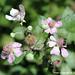 Fiori parco delle  madonie - Flowers Park madonie