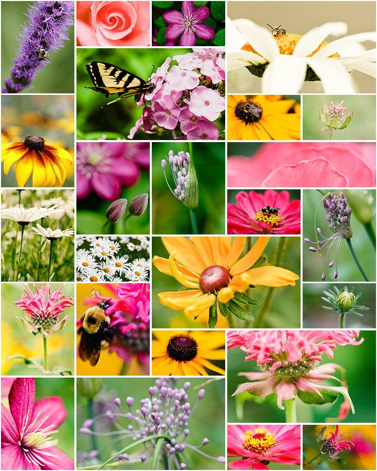 pat_s garden