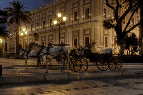 Horses at night. Seville. Caballos por la noche. Sevilla