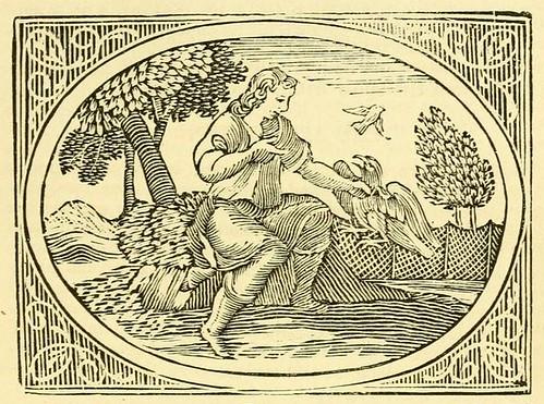 Accipiter Columbam Sequens et Rusticus