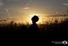 So I Sleep Alone (Rick Nunn) Tags: sunset sky sun nature field silhouette set clouds neck ben head crops ef50mmf14usm sotc horison sooc vsortpop