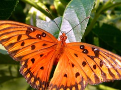 """""""Butterflys and Moths"""" (John C. Akers jr.) Tags: its that easy  butterflysandmoths photocontesttnc10"""