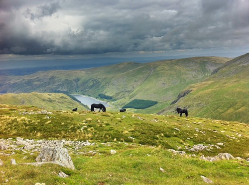 Fell Ponies on Mardale Ill Bell