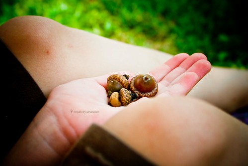 Gather ye....acorns?
