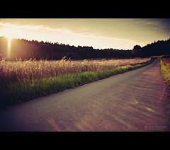 [ Time Stands Still ] (bonnix (Scotty)) Tags: sunset germany way afternoon path feld wiese weg wart timestandsstill badenwrttemberg nikkor50mm14 ilovelensflares nikond700 enjoyandrelax