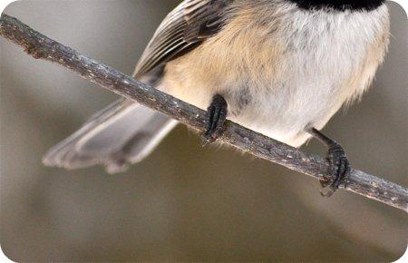 Birdie feet