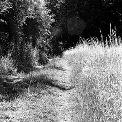 mamiya249 (salparadise666) Tags: mamiya c330 sekor super f45 4sec fuji neopan acros 100 caffenol rs 15min nils volkmer vintage camera medium format 6x6 square landscape rural bw black white monochrome hannover region niedersachsen germany analogue film 180mm