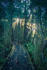 Boardwalk at the Te Waikoropupu Springs (CFBoucher Photography) Tags: new zealand nz south island springs walk boardwalk hike hiking sun sunrise nature walking trees forest woods photo photography landscape