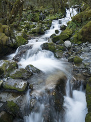Mountain Stream (newzild) Tags: newzealand teararoa hiker tramper trail route long distance capereinga bluff nzl