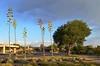 Agave Americana (suenosdeuomi) Tags: agaveamericana centuryplant santafe newmexico landofenchantment raiyardpark nikon nikond5100