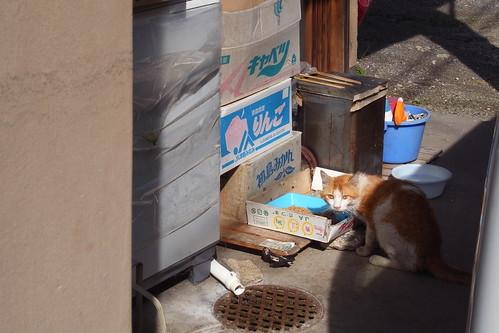 Today's Cat@2010-06-26