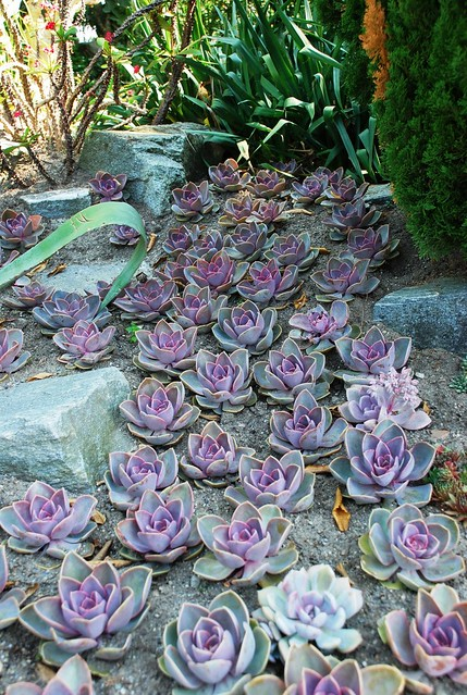 Cactus flower bed