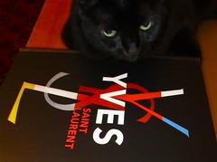SIAH (Neta Gov) Tags: cat blackcat greeneyes yvessaintlaurent netagov