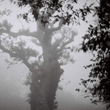 winter tree mist clevedon pollarded misty moddy fog foggy photo photography Mark Riley Cardwell Cardiff Journalism student