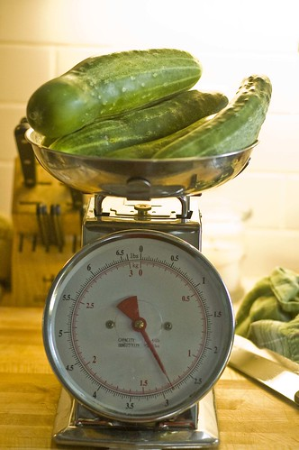 weighing the cucumbers