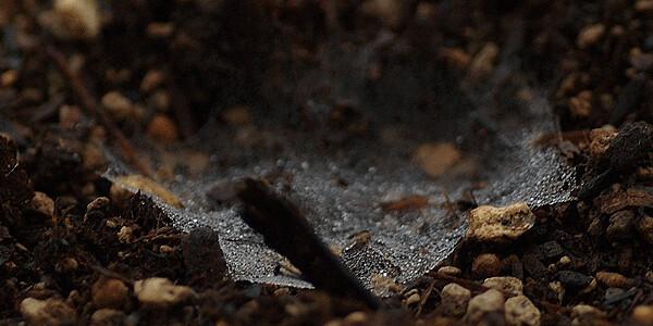 地面のクモの巣