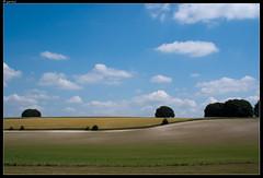 Wiltshire plains (jornt.) Tags: england sunny bluesky salisbury landscap