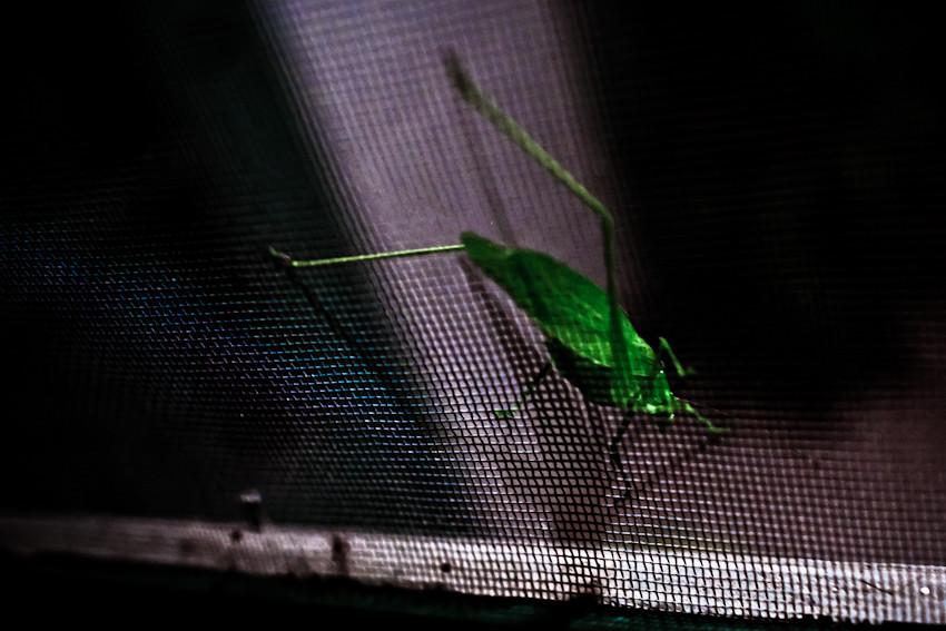 bug-o-vision-1