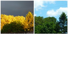 Same view one day apart. Nothing altered by me. (DavidK-Oregon) Tags: color green beautiful leaves yellow wow lumix gold fdsflickrtoys backyard colorful different view artistic panasonic 2010 anawesomeshot dmczs3 superamazingshots everydayissunday zs3 lumixzs3
