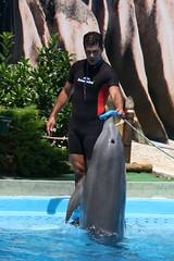 (Olaya Garcia) Tags: portugal canon eos dolphin algarve delfin albufeira zoomarine guia bottlenose golfinho tursiops truncatus mular roaz 1000d ruaz