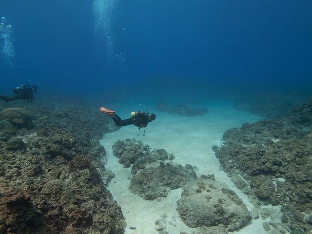 南大東島の海底の光景