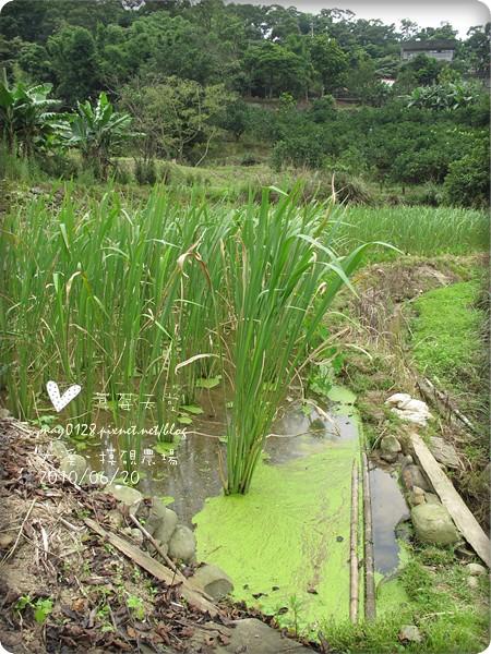 大溪摸硯農場168-2010.06.20