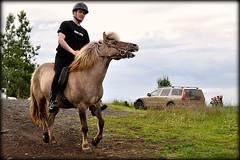 Farm Life (Sig Holm) Tags: horses horse island iceland islandia farm july sland jl islande 2010 icelandic islanda hestar hestur ijsland bndabr islanti slenskur  slendingar ttarmt    slenskt         syralangholt syralandholt