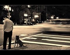 StillFast (Lanamaniac) Tags: new york city nyc summer urban blackandwhite bw dog man blur animal nikon manhattan cab stranger east nikkor streaks eastside uppereastside 2010 d90 lenoxhill lanamaniac strangerinnyc