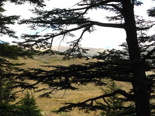 Horsh Arz el-Rab, Cedros de Deus, Libano
