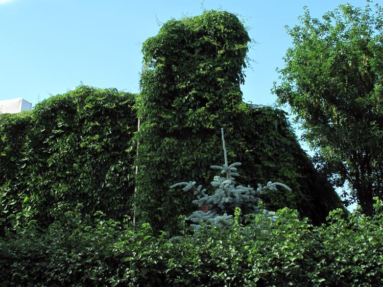 Lush bush