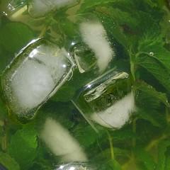 Iced Mint Tea (seelensturm) Tags: verde green ice tea mint vert grn herbaltea eis tee  hielo icetea glace nane ghiaccio menthe menta yeil  buz infusin mentha eistee  minze  tisana tisane       krutertee  glacies   minztee farbebekennen mastranto  ptisan committocolour seelensturmde