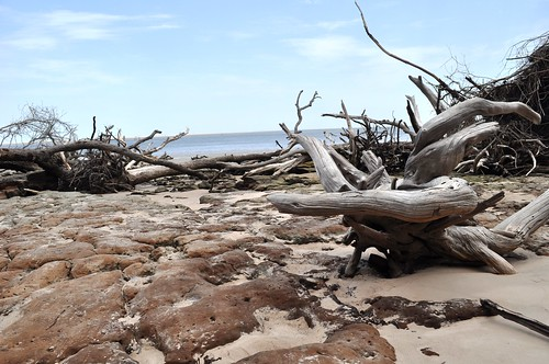 Driftwood and Rocks? at Blackrock Beach - Big Talbot Island State Park, Florida