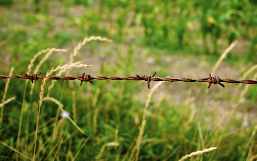 More Barbed Wire Than You Can Shake A Tetnus Jab At