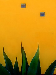 cactus on yellow (msdonnalee) Tags: cactus muro yellow wall mexico mexique agave mura yellowwall mexiko minimalsim tinywindows photosfromsanmigueldeallende fotosdesanmigueldeallende photigraphicartlegacy