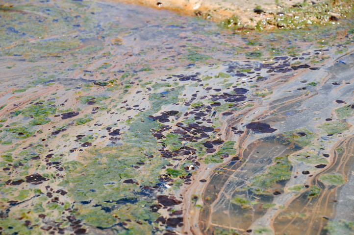 oil in tidal pool_6863 web