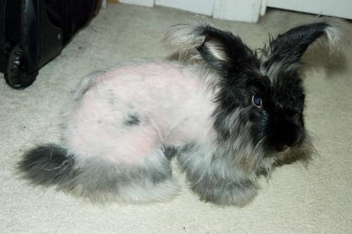 Naked Sirius.
