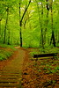 The Solitude of Dawn (dorothy mae) Tags: summer green nature bench dawn woods solitude quiet peace path peaceful trail serenity mywinners 100commentgroup saariysqualitypictures mygearandmepremium mygearandmebronze