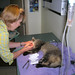 Dr. Jahren Tending to a Rescued Cat