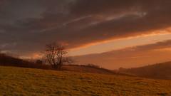 Ide Sunrise (PeteTakesPictures) Tags: england tree field sunrise golden nikon warm kitlens bathed devon exeter ide 1855mm pastoral magichour vaughanwilliams d40 d40x