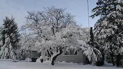 Baltimore Blizzard 2010 (litlesam1) Tags: winter snow baltimore blizzard blizzard2010