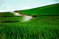 Lonly road (hannaneh710) Tags: road sky nature field car nikon heaven iran poppy     poppyfield d90  shahrod  hannaneh shahroud   kalposh
