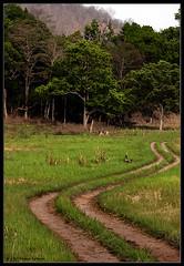 Grassland and Jungle (Deepak Kul) Tags: road india jungle grassland canon100400 corbettnationalpark uttarakhand canoneos40d deepakkulkarni