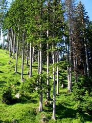 Verso l'Alpe Cermis Photo