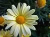 Sunset Flower (Chris Dahl1) Tags: urbanpark sunsetflower
